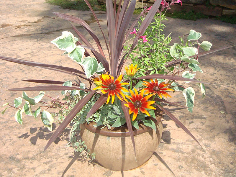 Native ECO Garden Center Pots