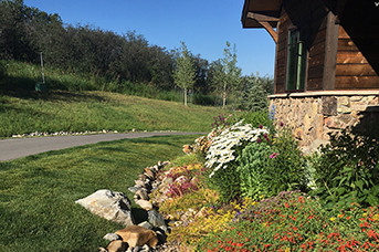 Native ECO Lawn and Gardens