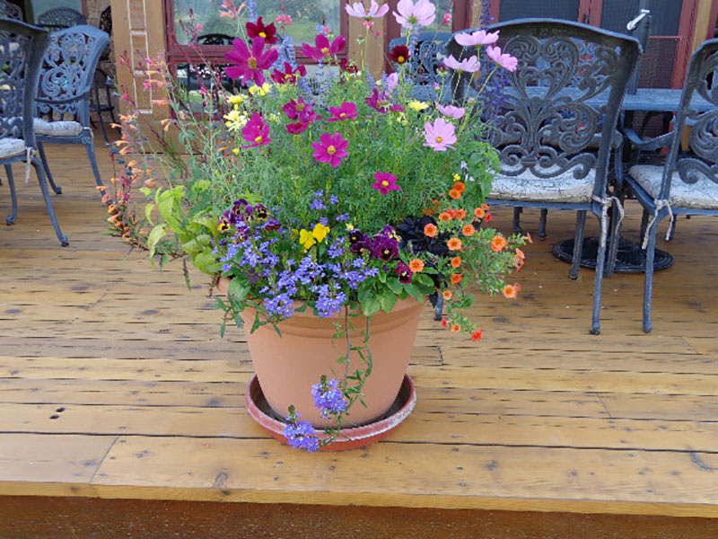 Native Eco Build Patio Pots